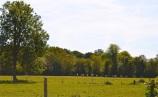 Pure prairie de Normandie